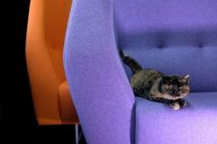 Aprile - Micia su divano mod.  La Zabetta