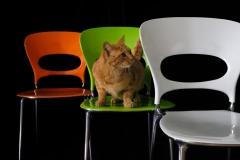 Luglio - Isidoro su sedia mod. Tonia